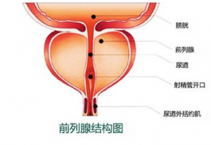 关于前列腺囊肿常见的症状
